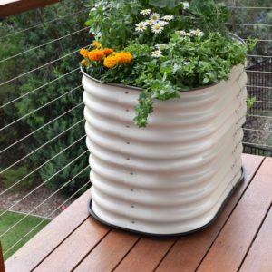 Herb raised garden beds.